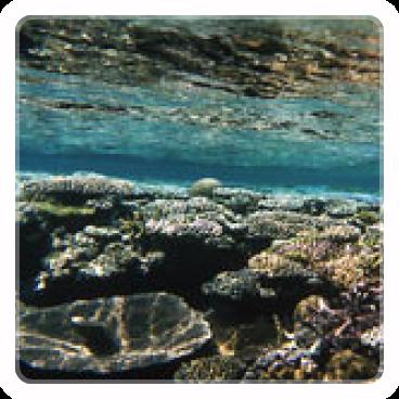 地球環境科学